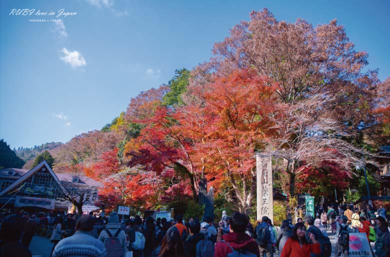 高尾山賞楓