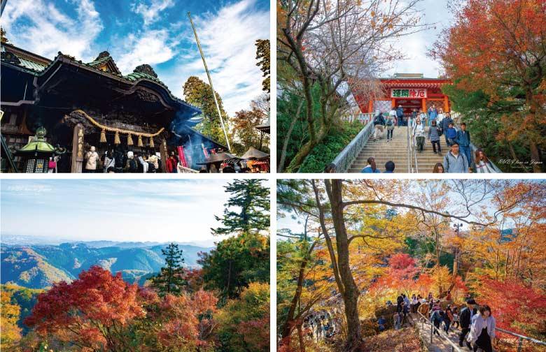 日本高尾山賞楓風景