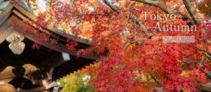 東京高尾山一日遊